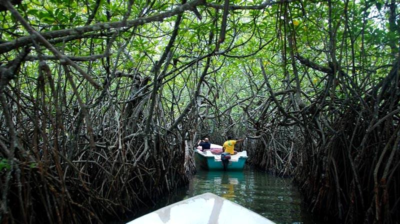 Mangrove Cave in Madu ganga Lake
