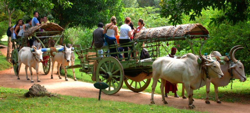 Bullock Cart Ride in Sigiriya