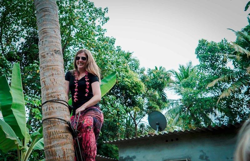 coconut tree climbing