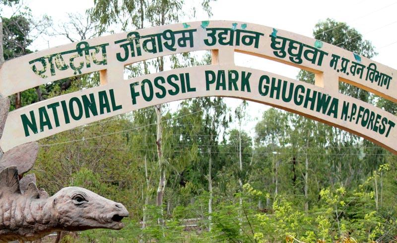 Fossil Park enrout Jabalpur - Amarkantak