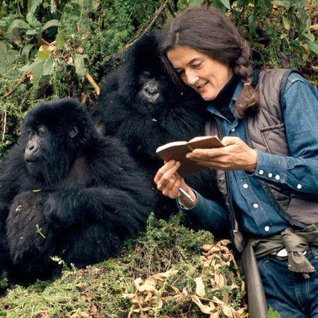 Dian and Gorillas