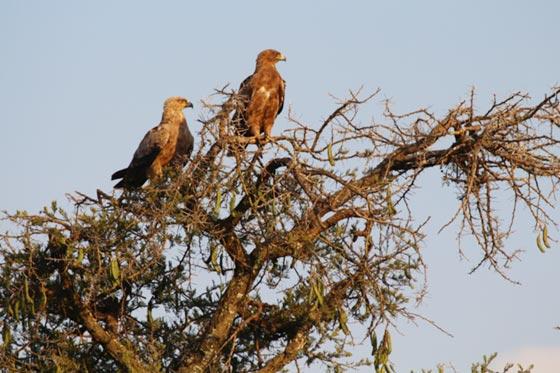 Bird of Rwanda