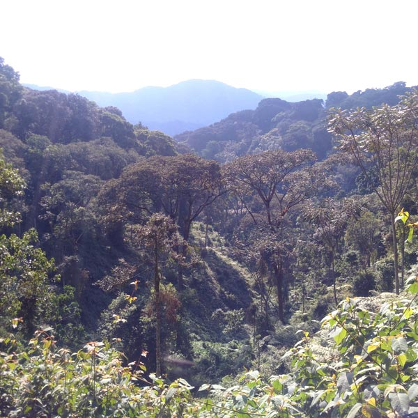 The View of Nyungwe Forest
