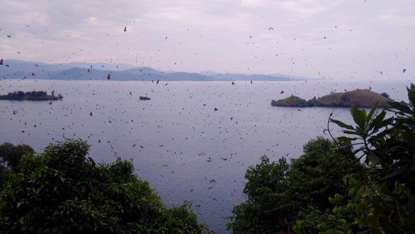 Burera and Ruhondo Lakes