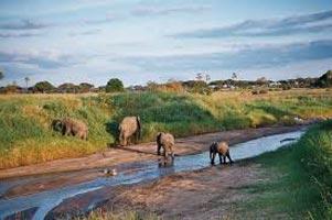 Elephants at Tarangire