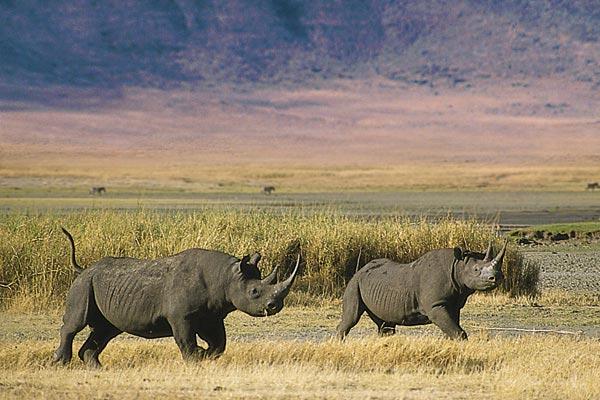 Rhino at Ngorongor crater