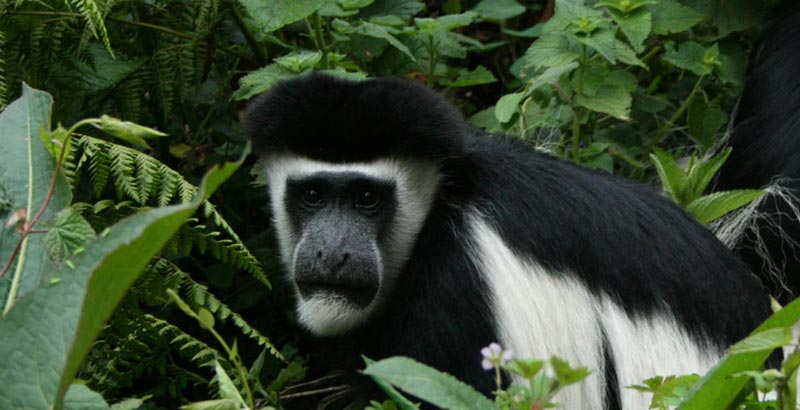 At Arusha national park