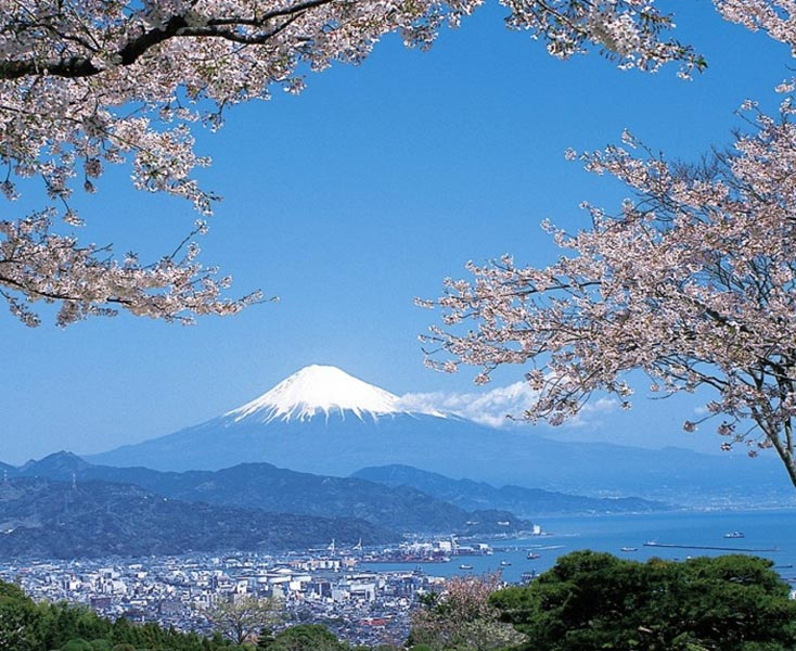 Mt. fuji in Cherry blossoms