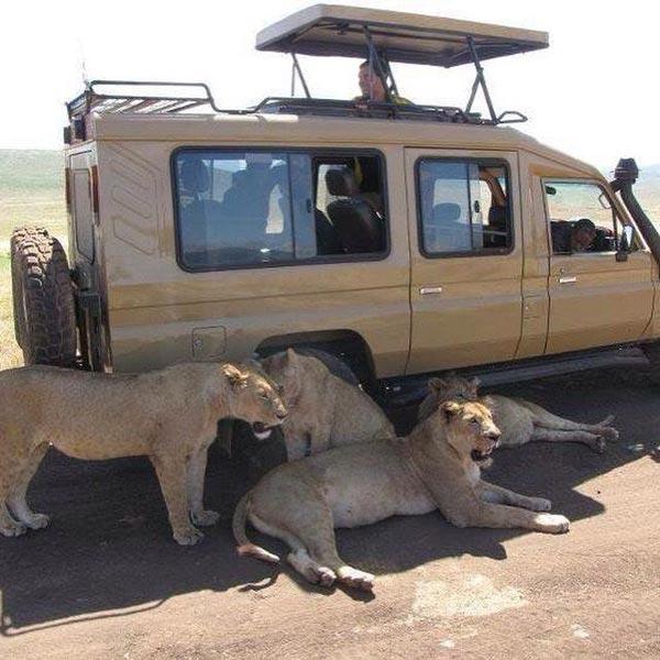 SAfari vihicle